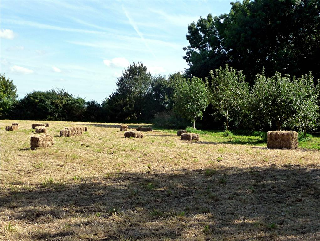 a meadow on a summer day with hay barrels on it